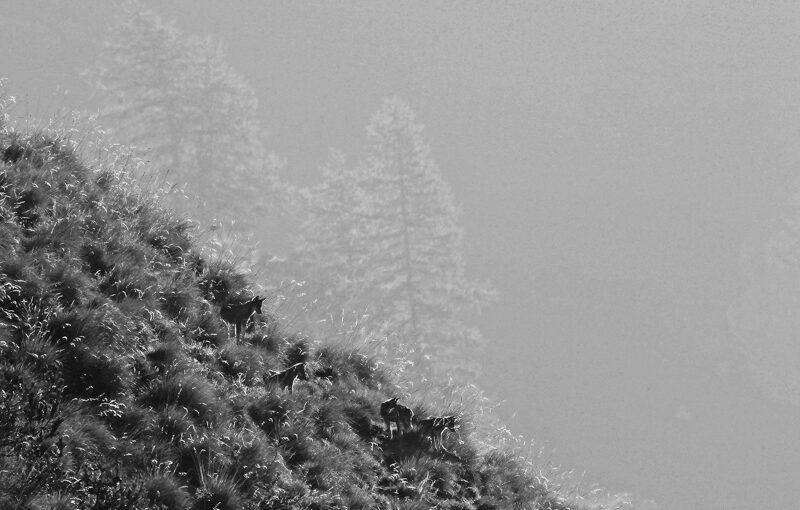 Dante Alpe