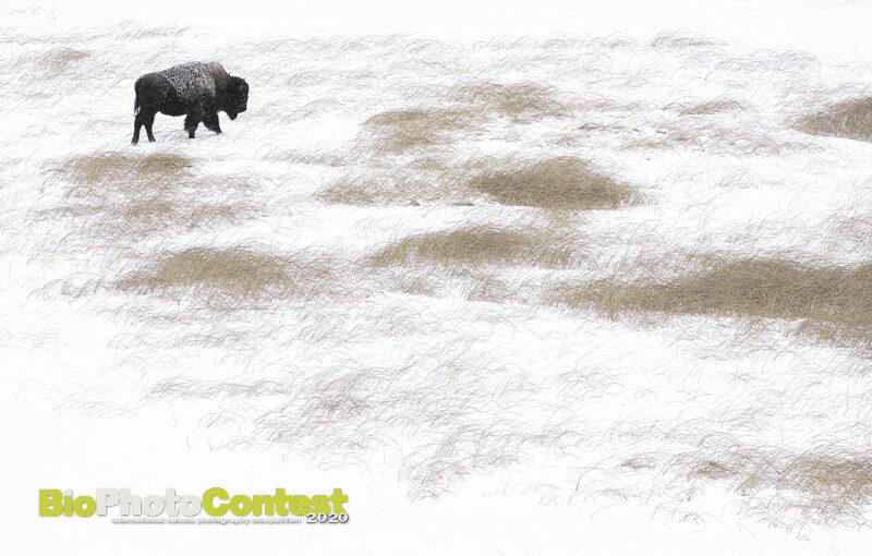 Loulou Beavers